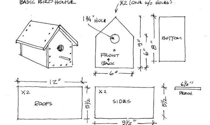 Bird House Plans Freehummingbird Backyard Birding Wildlife