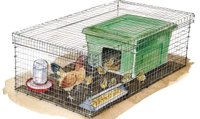 Build Low Cost Mobile Brooder Box Sustainable Farming Mother