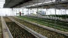 Commercial Greenhouse Environmental Control Gothic Arch Greenhouses