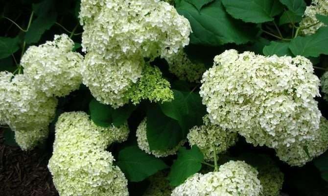 Creative Gardener Shade Loving Plants Woodland Garden