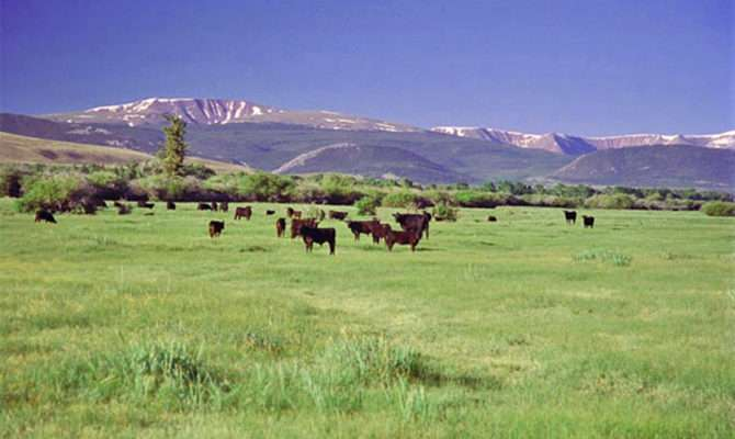 Lonetree Ranch Bates Land Consortium Inc