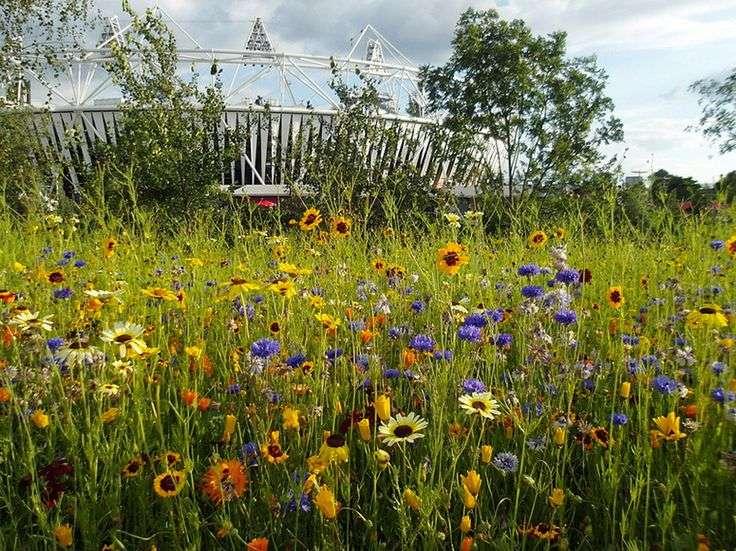 Meadow Gardens Bluedale Plants Blog