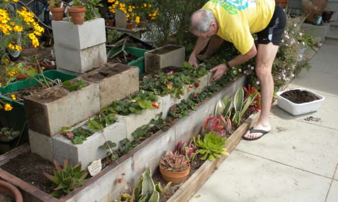 Strawberry Terrace Coastal Gardening Southern California