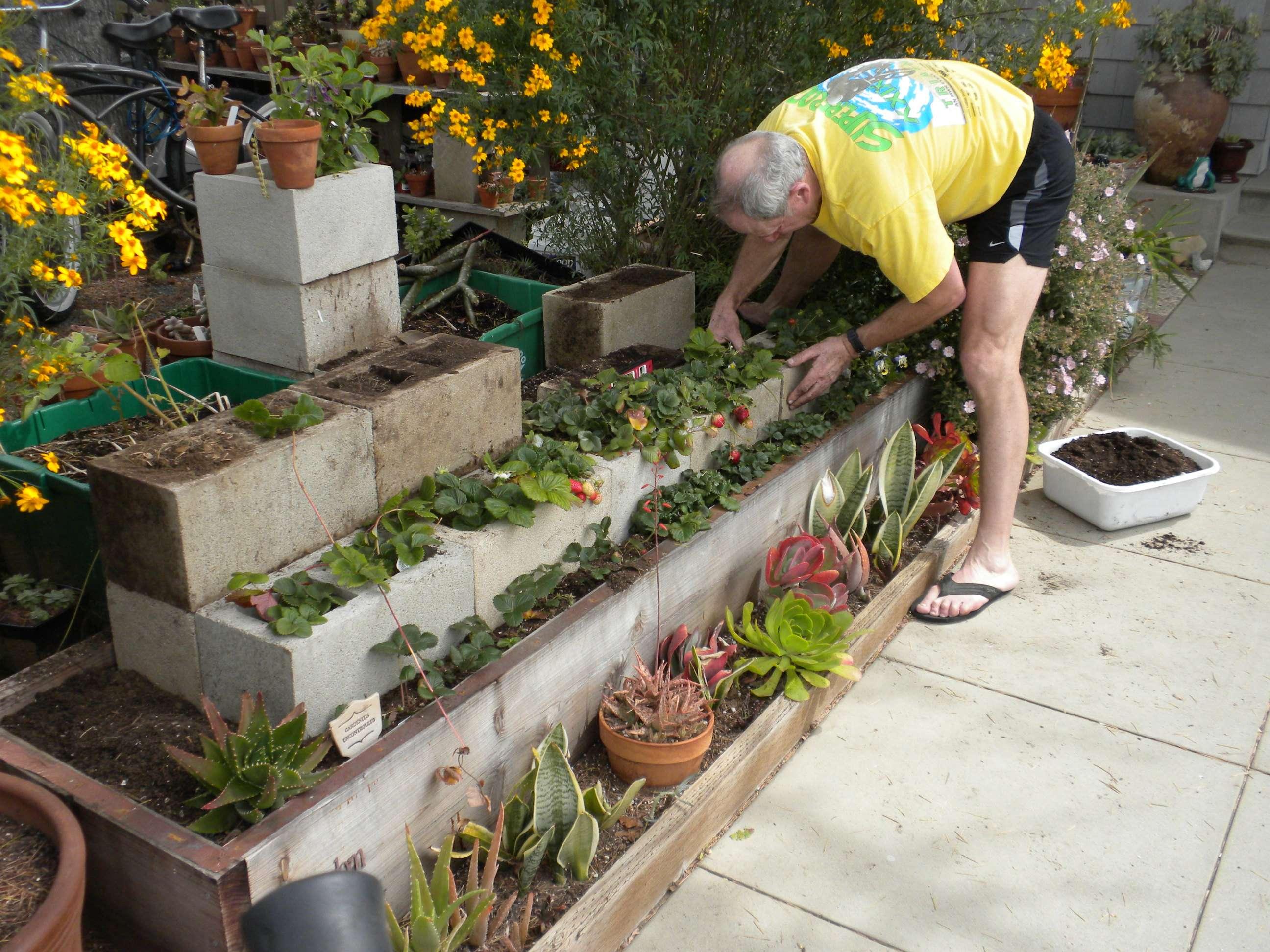 Strawberry Terrace Coastal Gardening Southern California